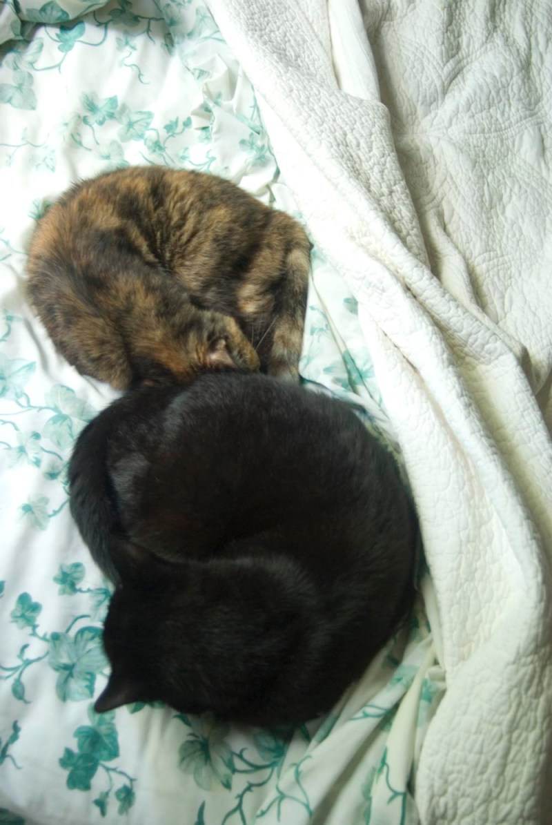 two cats curled on bed