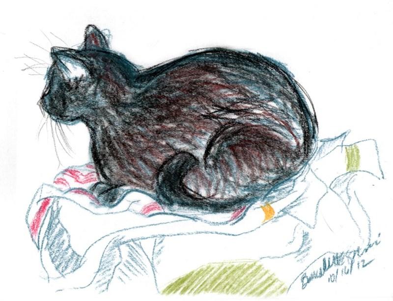 sketch of cat on dishtowels