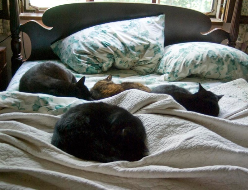 five cats on bed