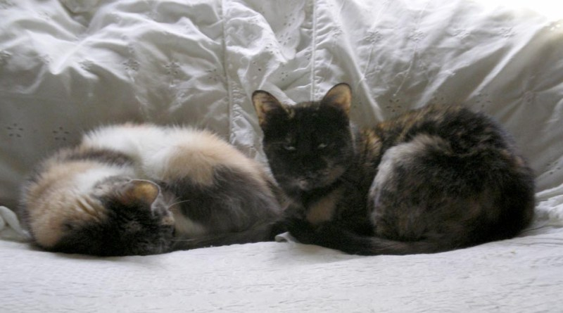 two cats on bed