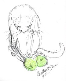 ink sketch of cat playing with green apples