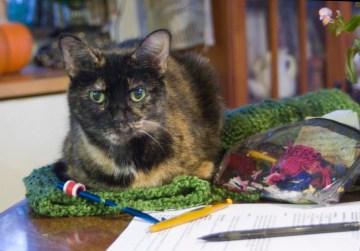 tortoiseshell cat on green crochet