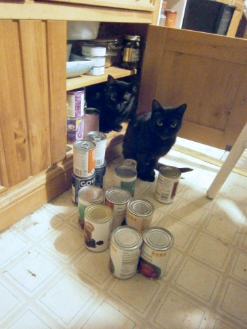 cats and canned goods