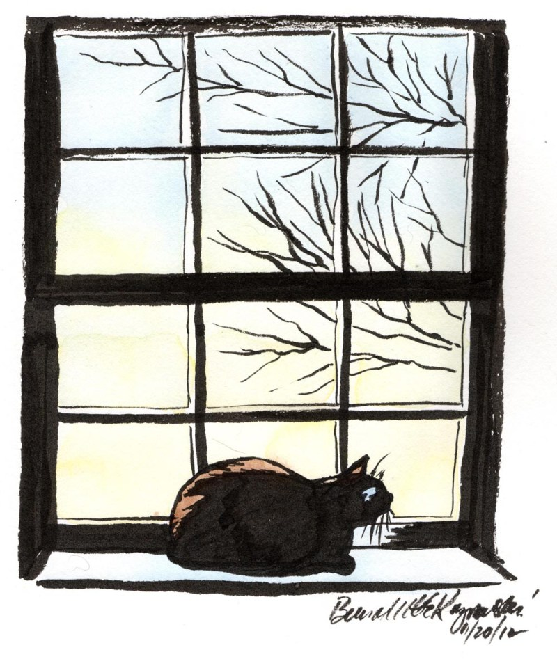 ink drawing with watercolor of cat on windowsill