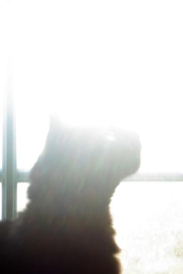 cat by sunny window