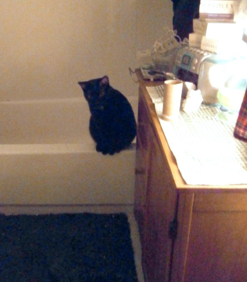 black cat on tub