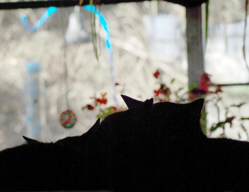 silhouette of cats with bird feeder Daily Cat Photo
