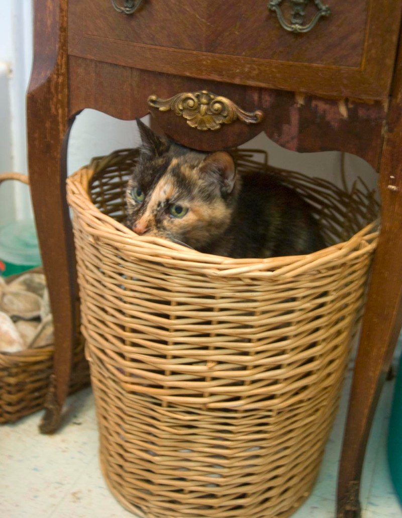 tortoiseshell cat in basket
