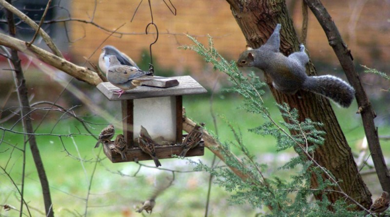 birds and squirrel at feeder