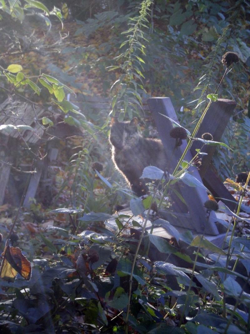 tortoiseshell cat outdoors with sunbeam