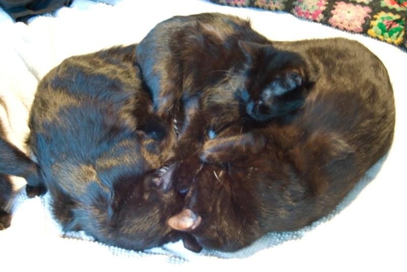three black cats sleeping