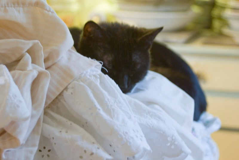 black cat sleeping in sheets