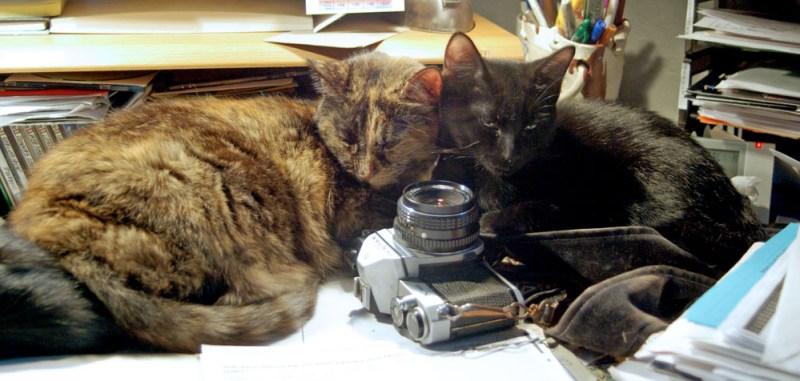 tortoiseshell cat and black kitten