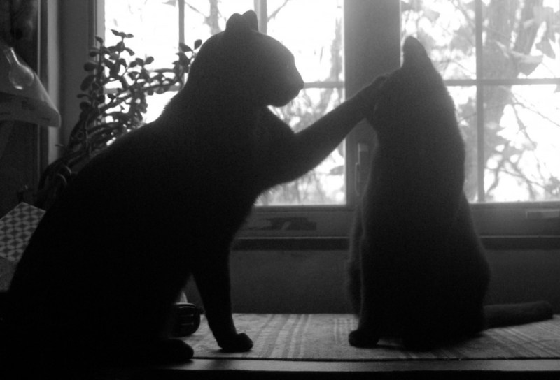 two cats silhouetted