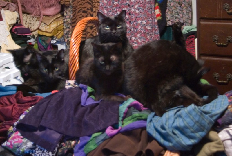 five black cats on pile of laundry