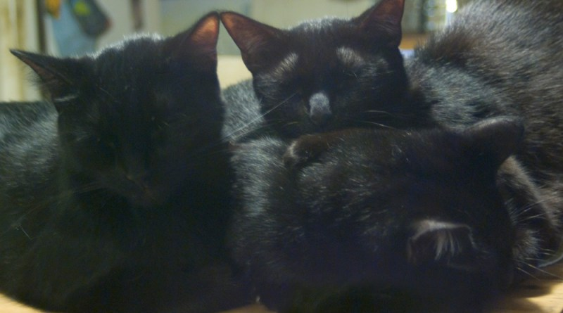 three black cats asleep