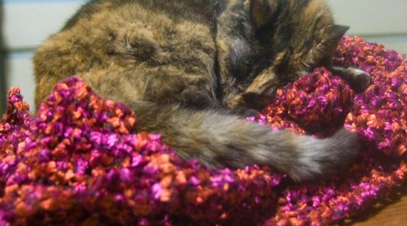 tortoiseshell cat sleeping on shawl