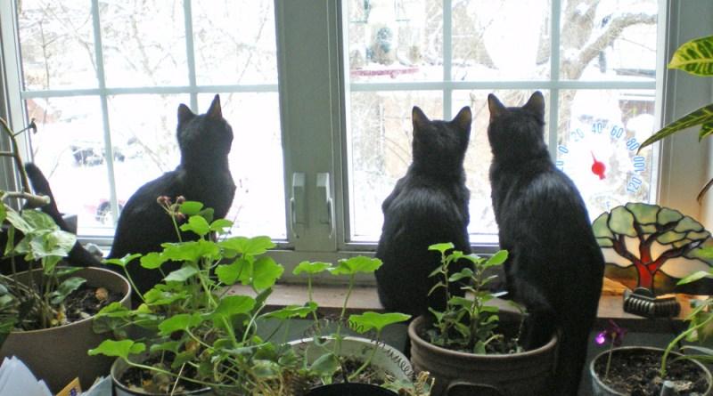 black cats at window