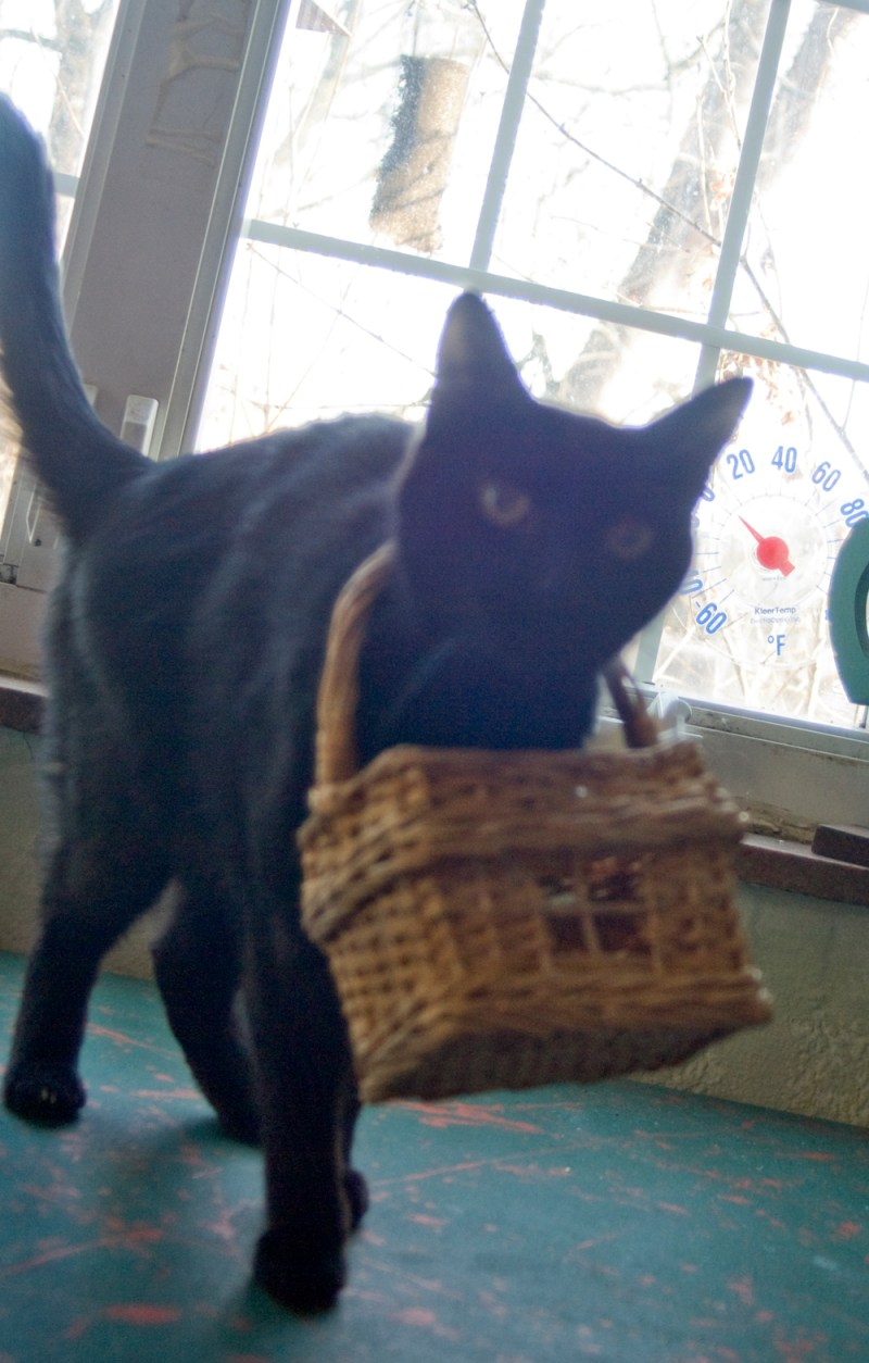 black cat with basket