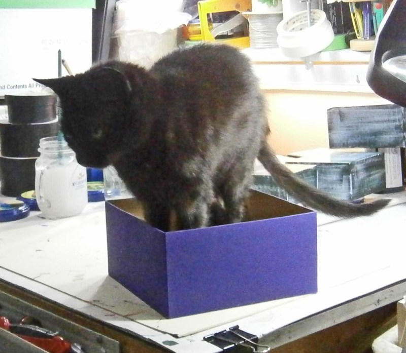 black cat in purple box