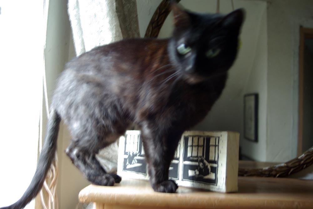 black cat in front of print