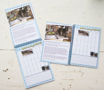 images of calendars with cat