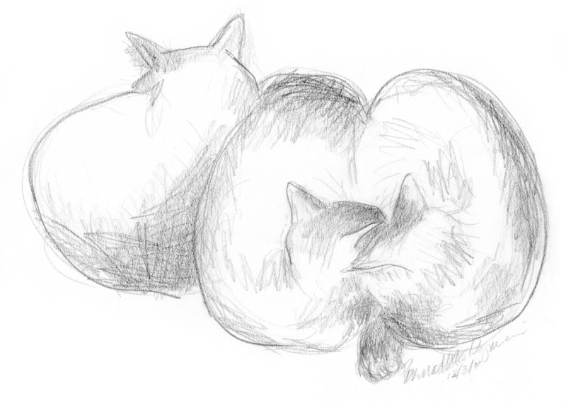 pencil sketch of three cats