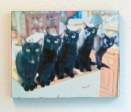 color photo of five black cats