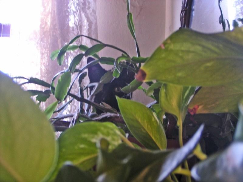 black kitten hidden in greenery