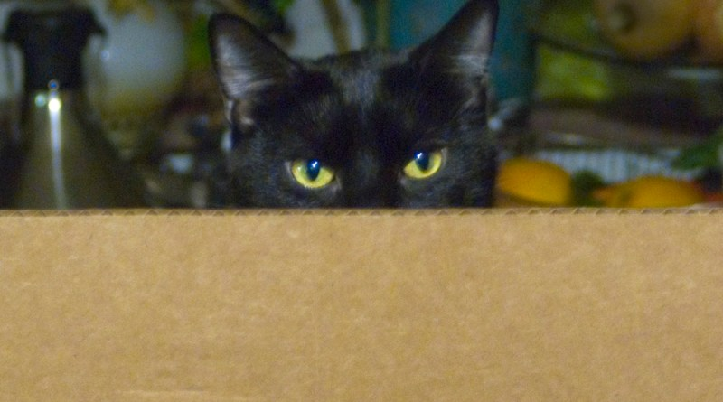 black cat in cardboard box