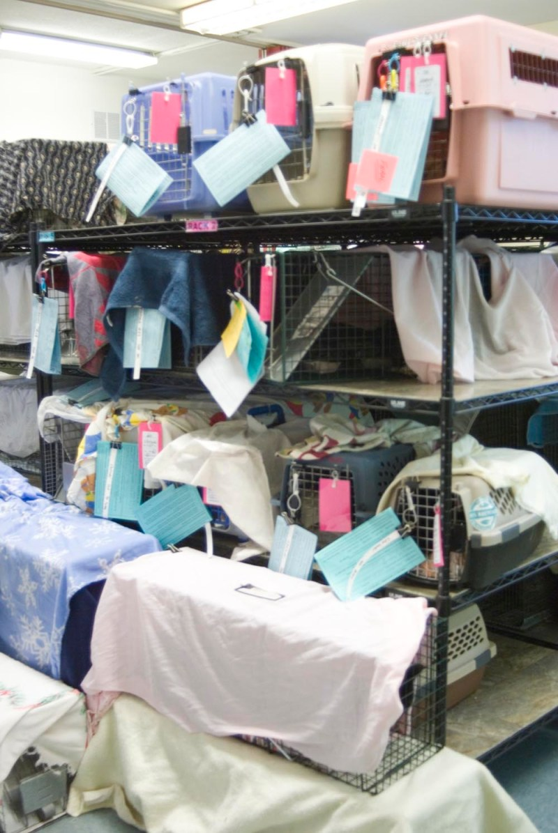 cats in carriers at spay neuter clinic