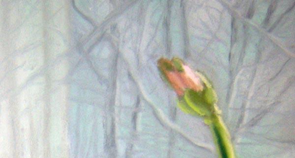 amaryllis bud.