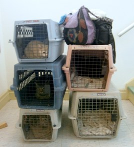 five cat carriers