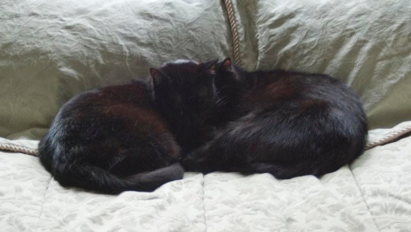 two black cats napping