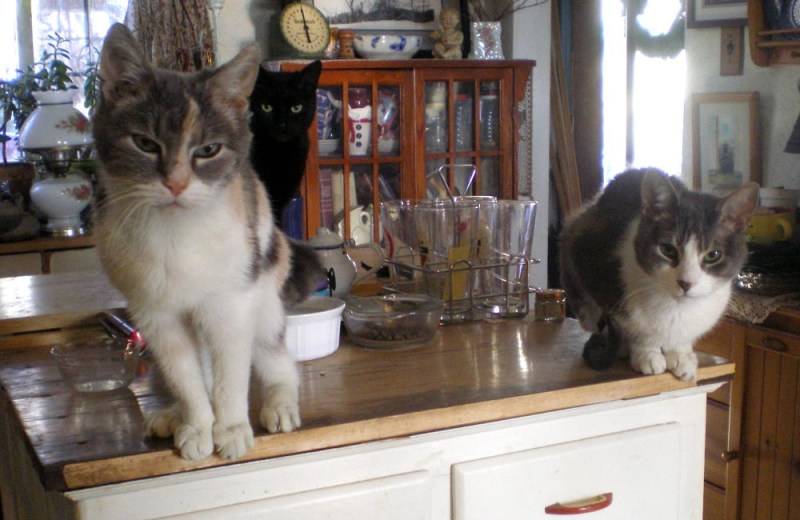 two cats on cabinet