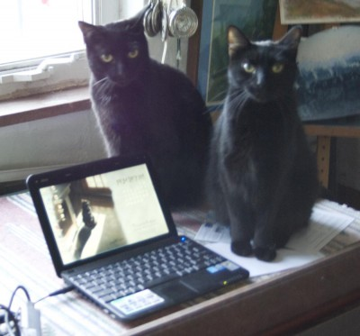 two black cats with netbook