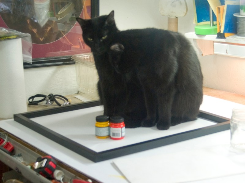 two black cats in picture frame