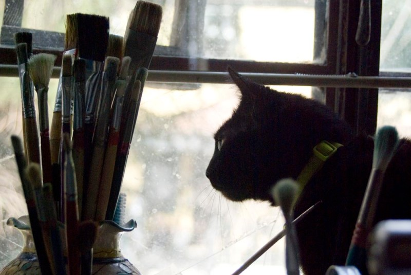 black cat and vase of paintbrushes.