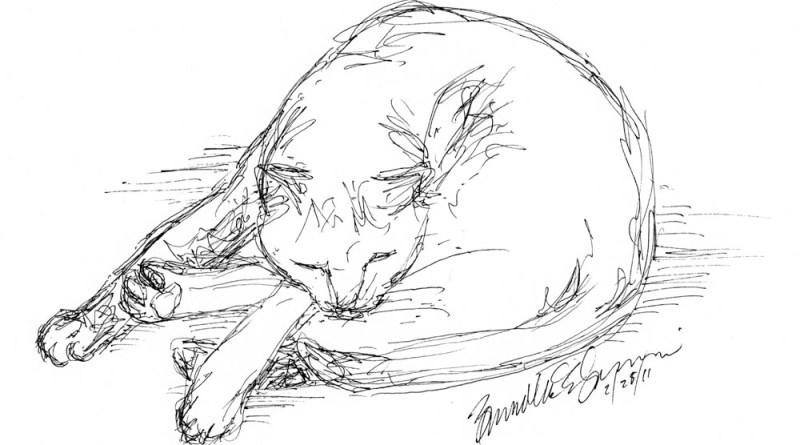 ink sketch of sleeping cat