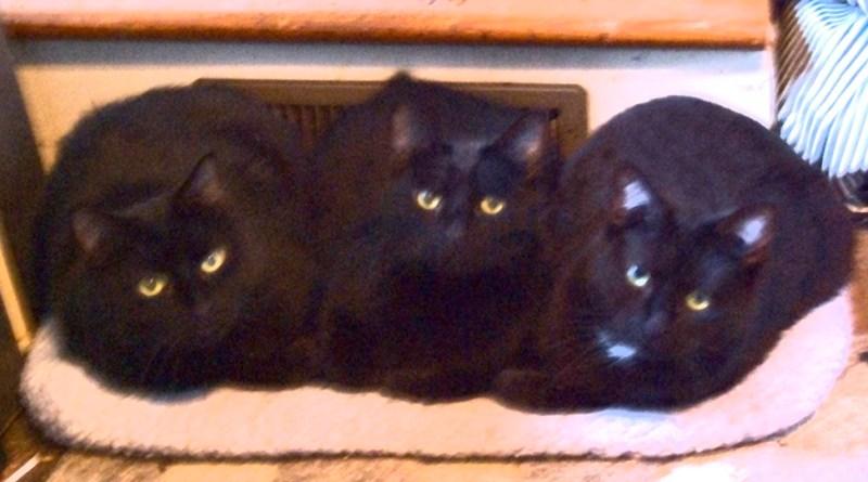 three black cats on bed