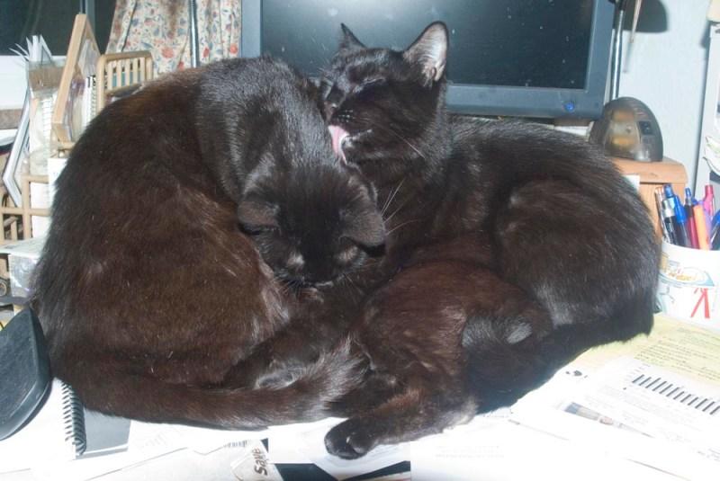 pile of black cats on desk