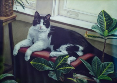 portrait of black and white cat