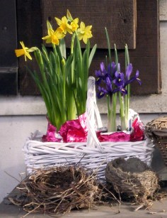 gift basket of tiny narcissus and iris