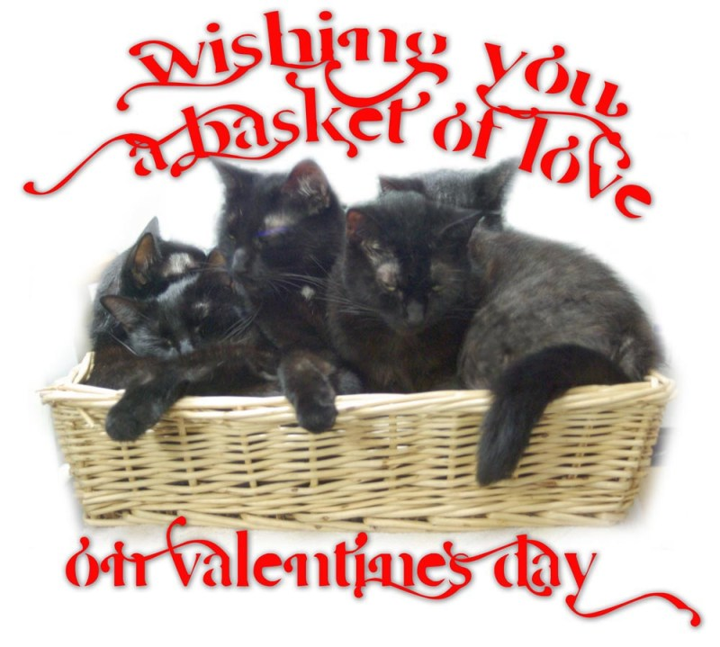 valentine wish with five cats