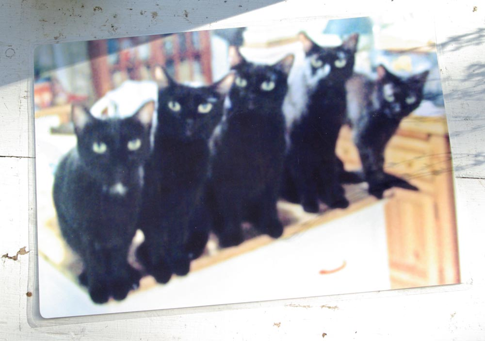 Five Black Cats in a Line color side of laminated placemat.