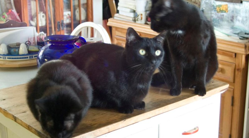 three black cats on cabinet