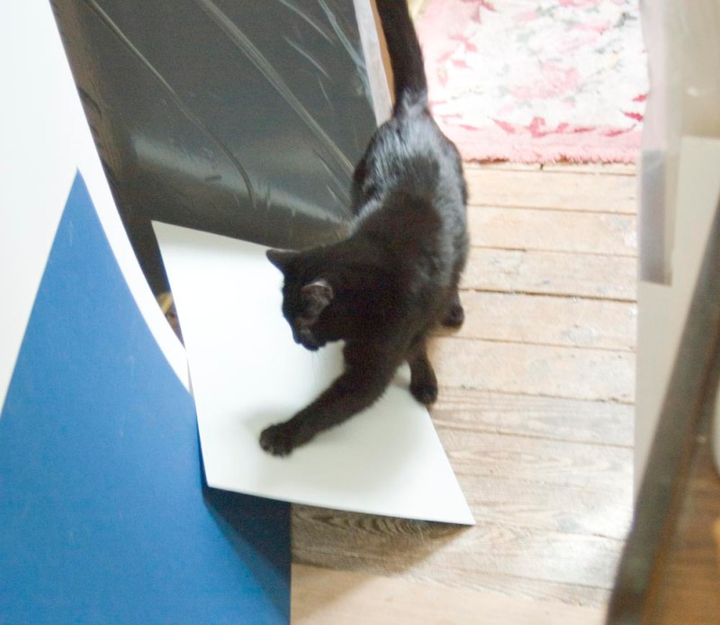 black cat with mat board