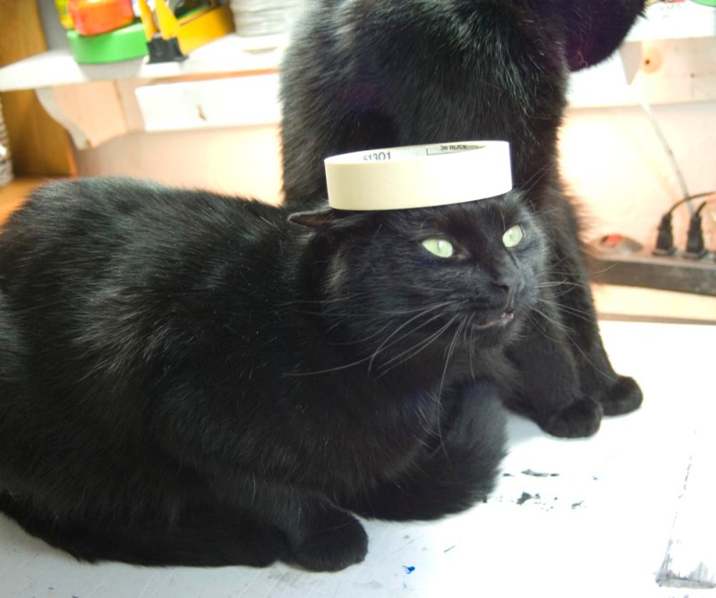 black cat with roll of tape on her head