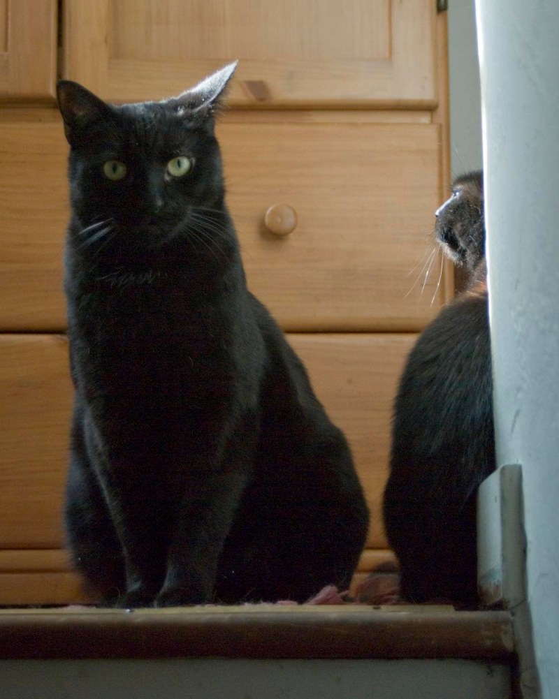 two black cats at top of steps