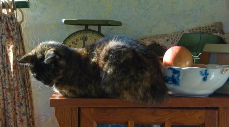 photo of tortoiseshell cat with bowl of apples